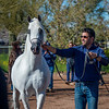 Arabians Int  Open House-172