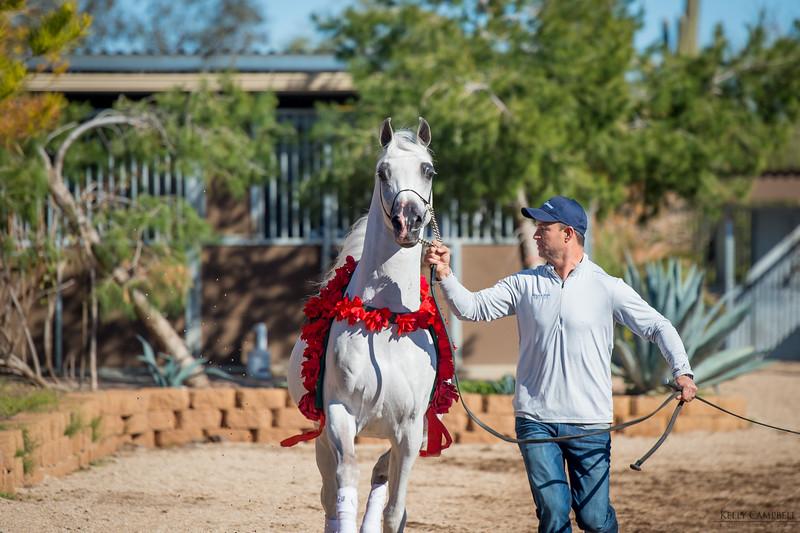 Arabians Int  Open House-162