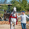 Arabians Int  Open House-162