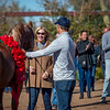 Arabians Int  Open House-156