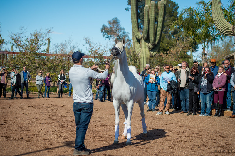 Arabians Int  Open House-125