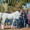 Arabians Int  Open House-111