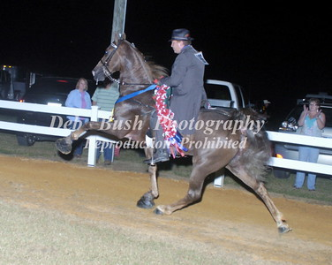 CLASS 41  WALKING HORSE CHAMPIONSHIP - CANTER