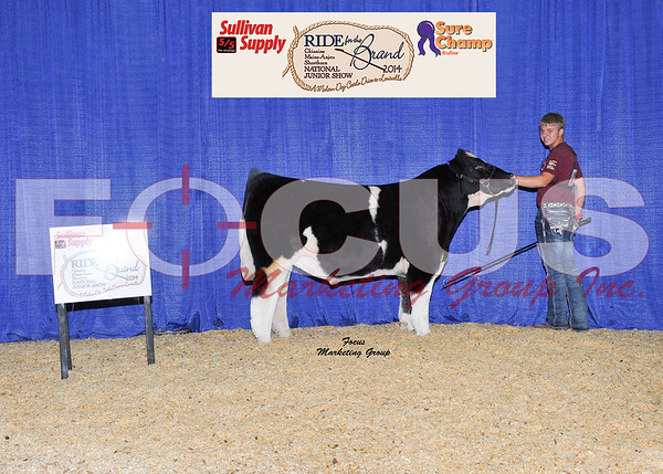 2014 National Junior Maine-Anjou / Chianina Shows