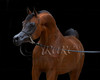 Dubai Stud : 137 galleries with 2284 photos