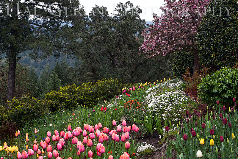 Ananda Village Gardens<br /> Nevada City, California<br /> 1104W-AT10