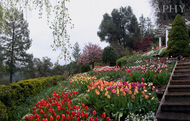 Ananda Village Gardens<br /> Nevada City, California<br /> 1104W-AP1