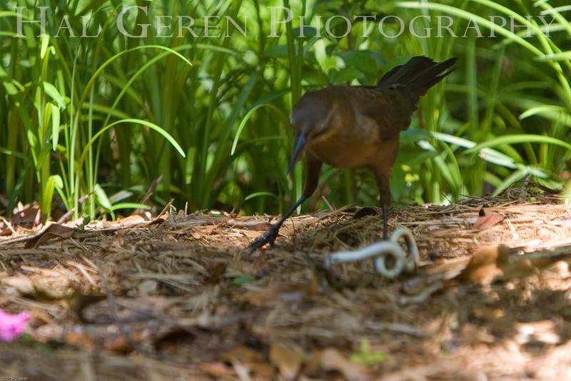 Bird vs Snake 2 of 7
