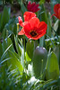 Red Flower 5