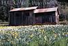 Cabin<br /> Daffodil Hill, California<br /> 0904D-B4-2