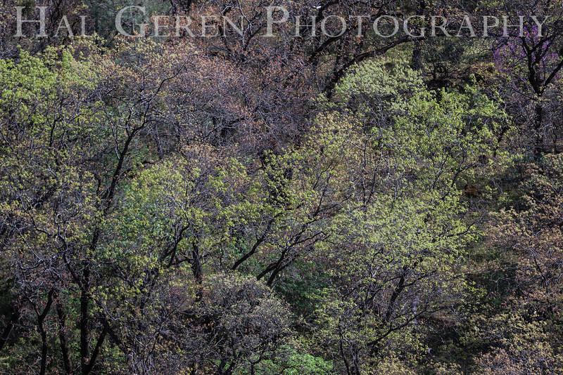 Yuba River, California<br /> 1303W-T1