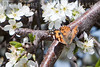 Butterfly and Blooms<br /> Marysville, California<br /> 0903W-BAB1A