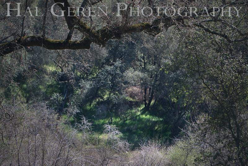 Hidden Glen<br /> Amador County, California<br /> 0903W-G1