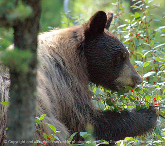 021-bear-grand_tetons-10aug05-0103