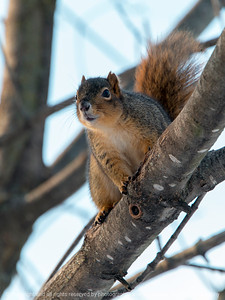 015-squirrel-wdsm-07jan18-09x12-001-3499