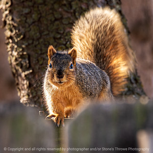 015-squirrel-ankeny-04mar20-03x03-006-400-5642