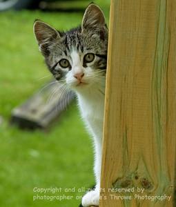 023-cat-warren_co-10jun11-1146