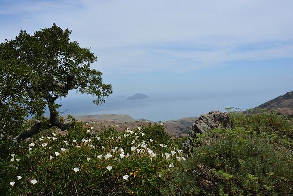 Santa Cruz Island - Day 1 (El Montanan Peak - 1,808) May 3, 2014