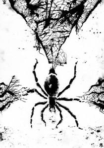 Spider, spider