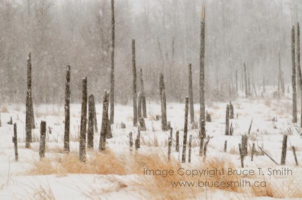 Dead trees in a blizzard