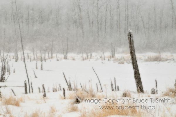 Meadow in a blizzard