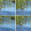 4 Pic Fishing