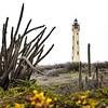 California Lightouse and cactii.  Noord, Aruba