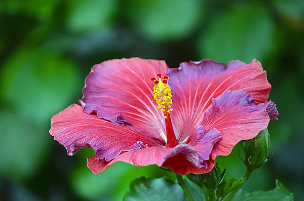 """My favorite flowers in/at the Conservatory are really the lilies and hibiscus.  Lots of fun to practice macro/micro photography.  Print available at: <a href=""""http://markwirzburger.zenfolio.com/"""">http://markwirzburger.zenfolio.com/</a>"""
