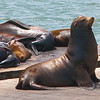 Proud sea lion.