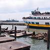 Pier 39 Sea Lions & Tour Boat