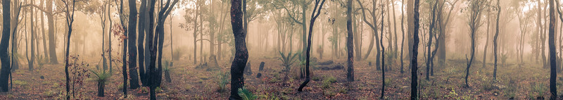 Misty Jarrah Afternoon