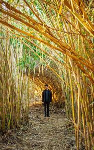 Tom Bamboo