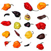 PEPPERS-2a