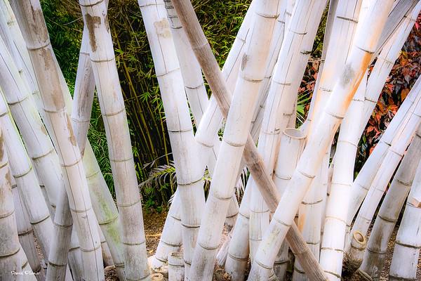 Big Bigger Biggest Bamboo