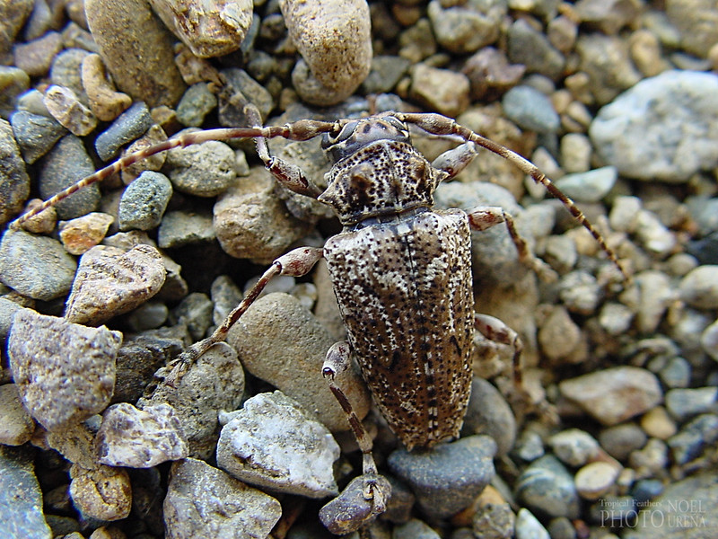Beetle - on gravel by the beach
