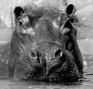 BW 02 Hippo Heaven 2