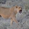NB 16 I am Woman Hear Me Roar