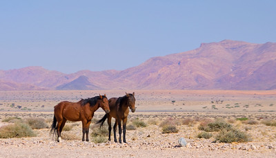 NB 20 The Wild Horses of Namibia