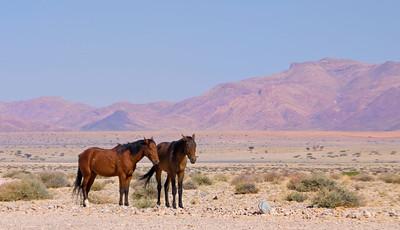 NB 20 The Wild Horses of Namibia