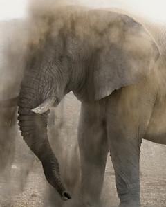 NB 08 The Dusty Elephant