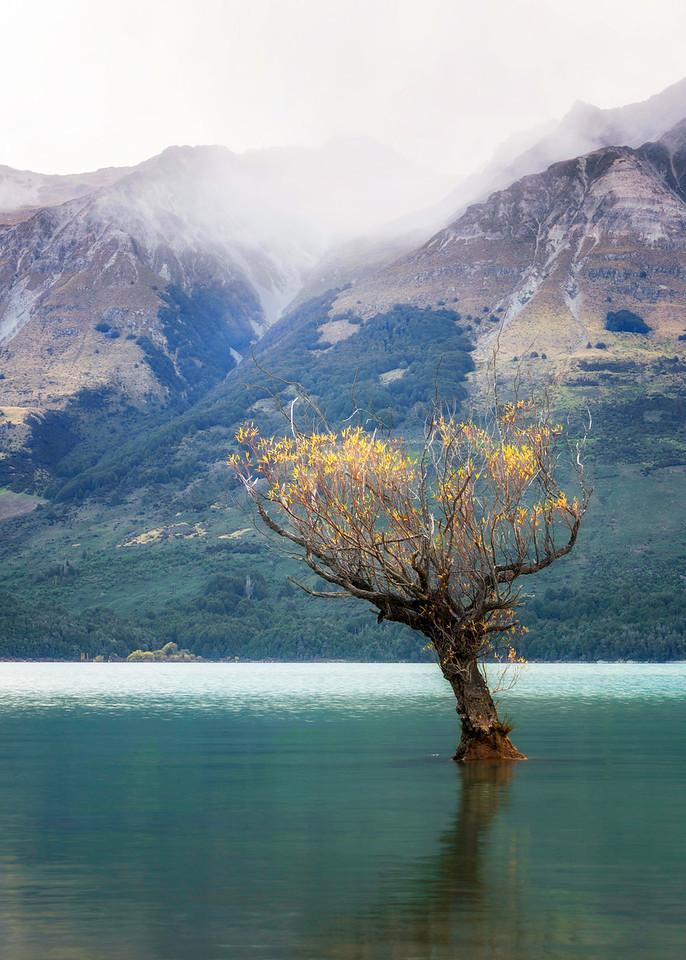 NZ 06 Autumn Willow