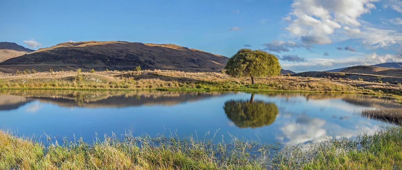 The Nevis Tree