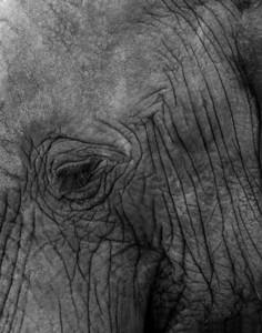 TNP 03 Eyelashes & Wrinkles