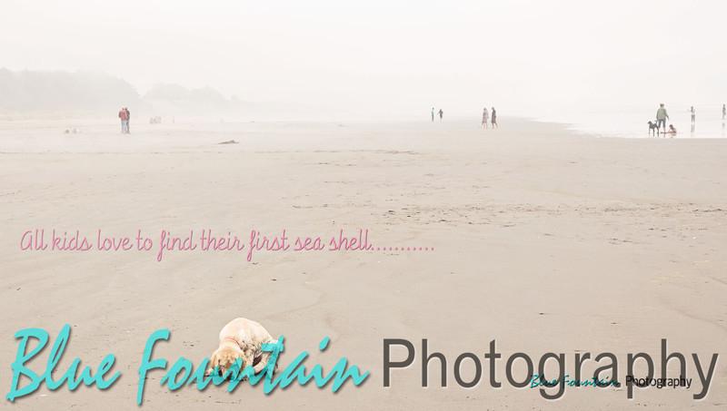 dory-sea-shell