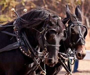 Empire Carriage
