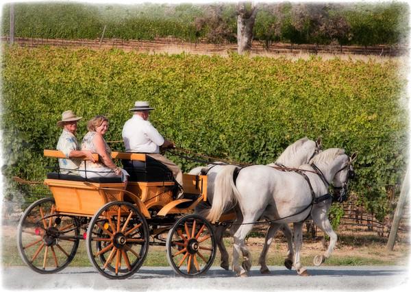 Naggiar Winery Harvest Festival