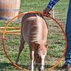 cooper hoop