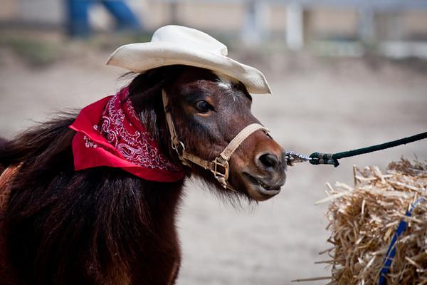 Rockin Horse Ranch