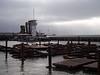 "Pier 39 <A HREF=""http://en.wikipedia.org/wiki/California_Sea_Lion"">Sea Lions</A>"