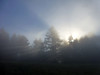 Fog and trees and sun